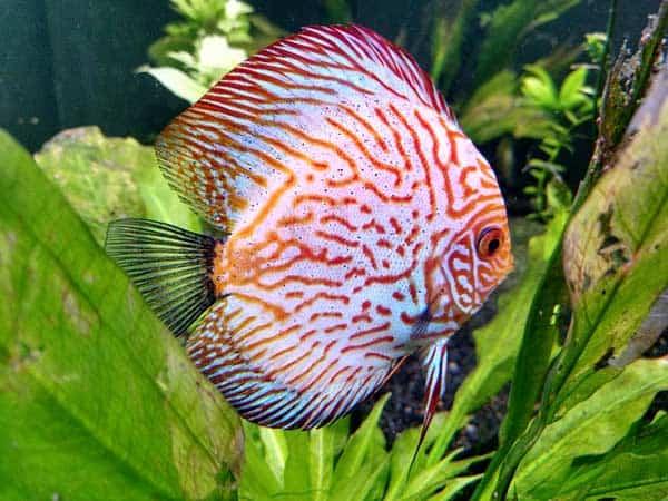 Schecke regelmäßig unseren Aquarien Guide auf neue Tipps!