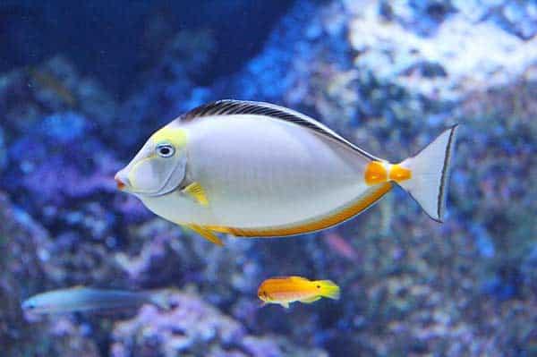Wie viele Fische passen in Dein Aquarium?