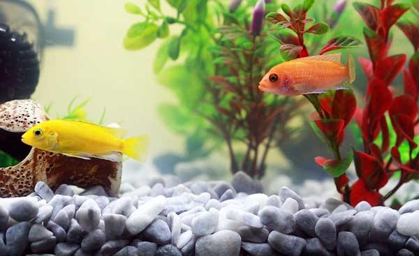 Aquaristik - wie geht's? Unser Aquarium Guide zeigt es