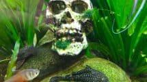 Aquarium Deko