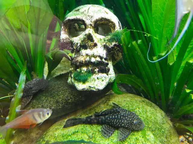 Aquarium Deko zu Halloween