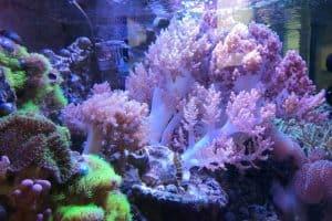 Korallenquarium