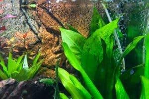 Aquarium Wasserwechsel